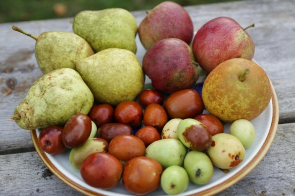 European pears, apples, Asian pear, and jujubes.