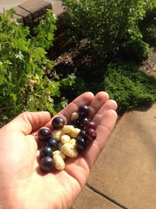 And a handful of deliciousness...free for the picking! We're scheming more and more PUBLIC edible landscapes.